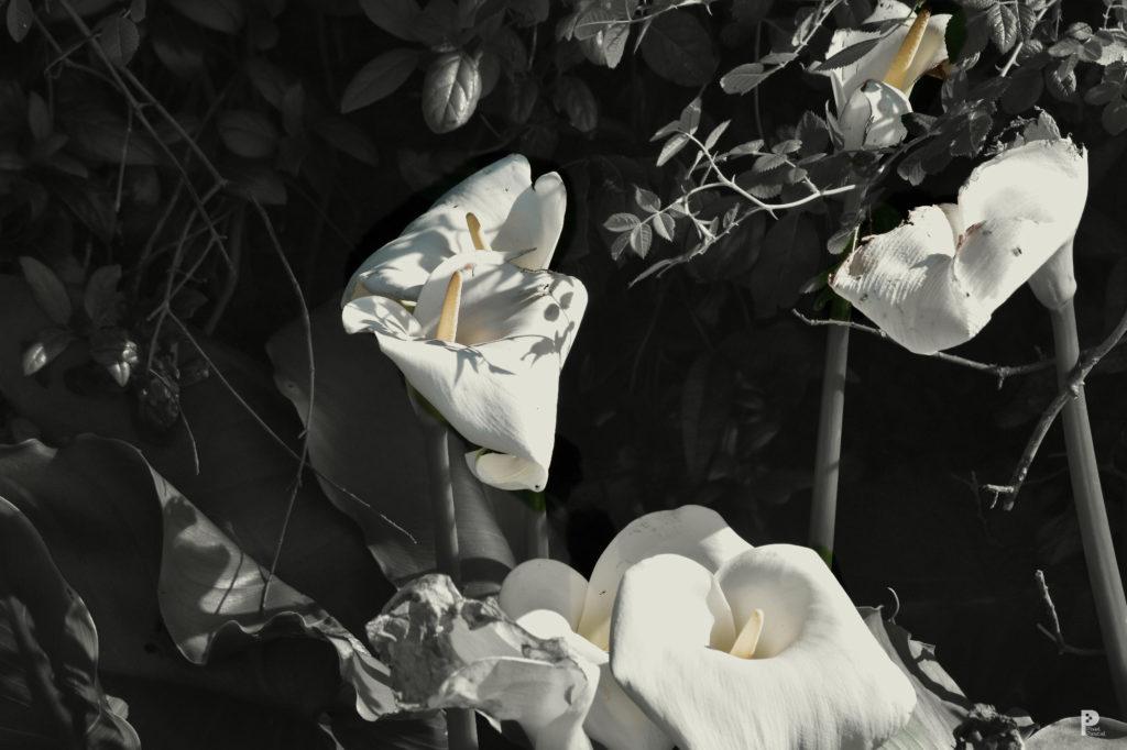 photographie nature plante jardin